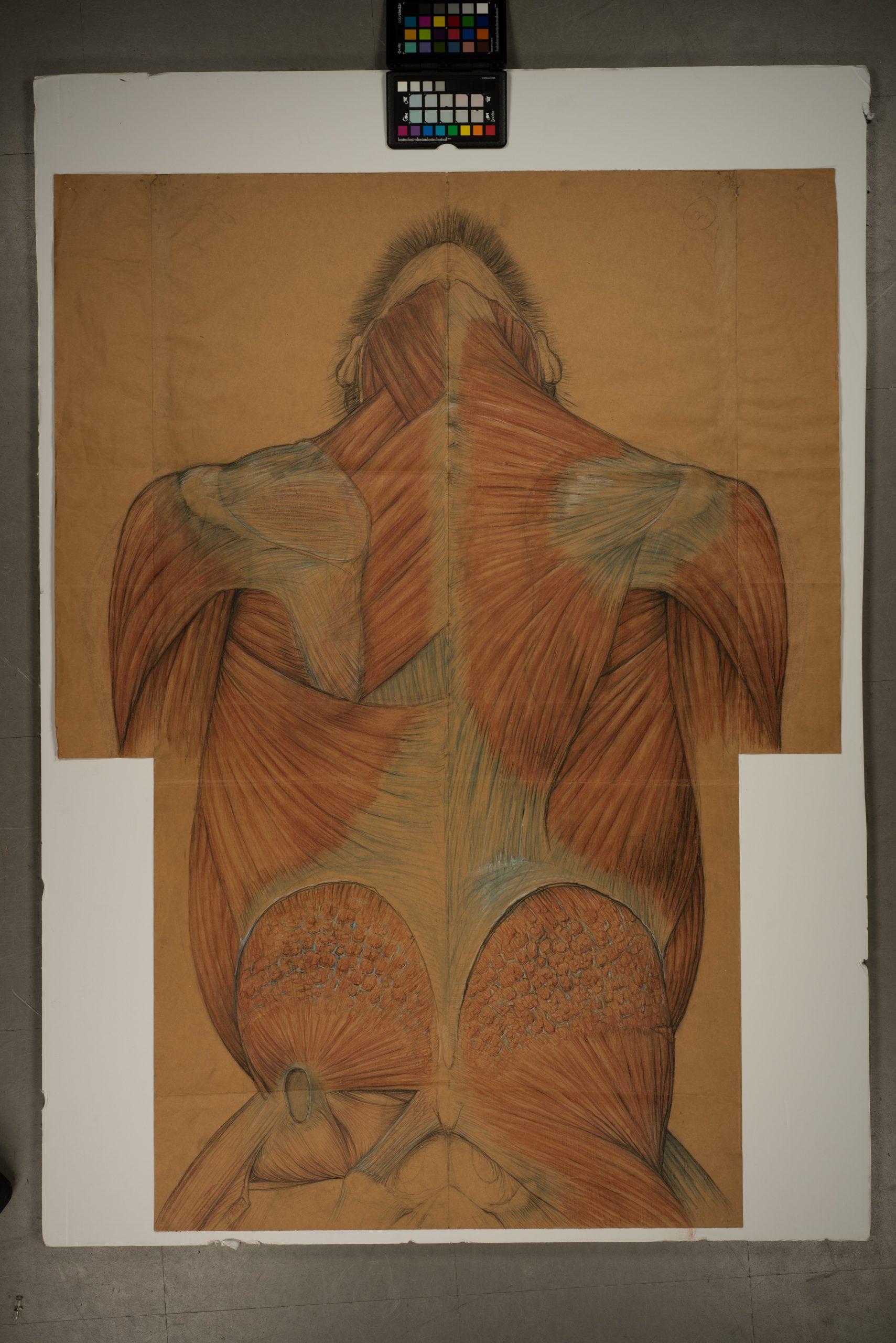 Henry Cushier Raven's Gorilla drawing (back)