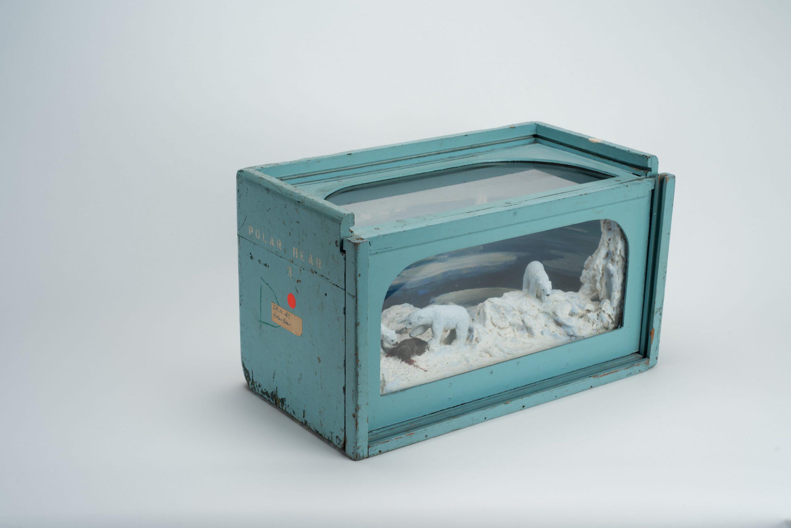 Polar Bear Educational Diorama (opened)