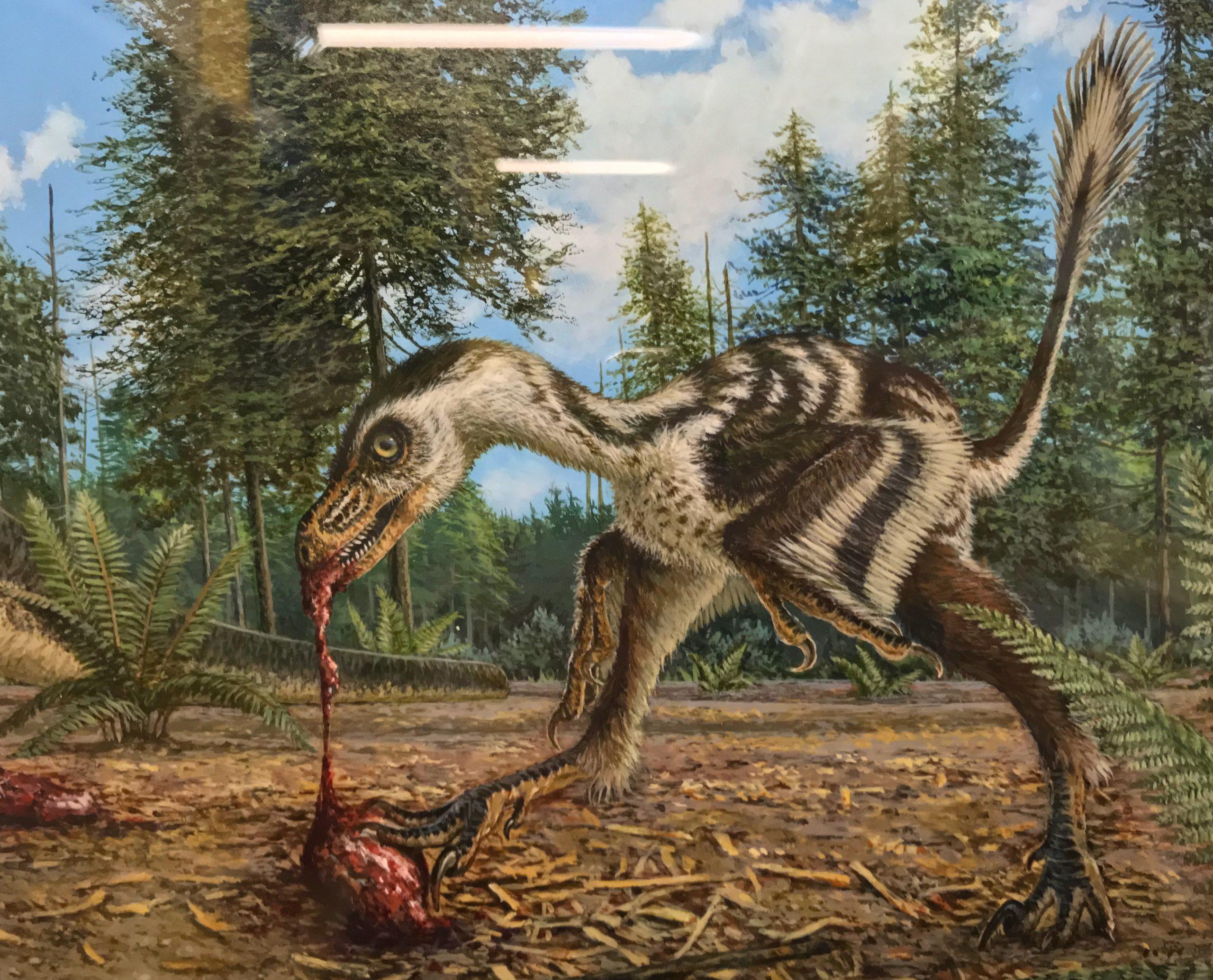 Skrepnick's Bambiraptor (detail)