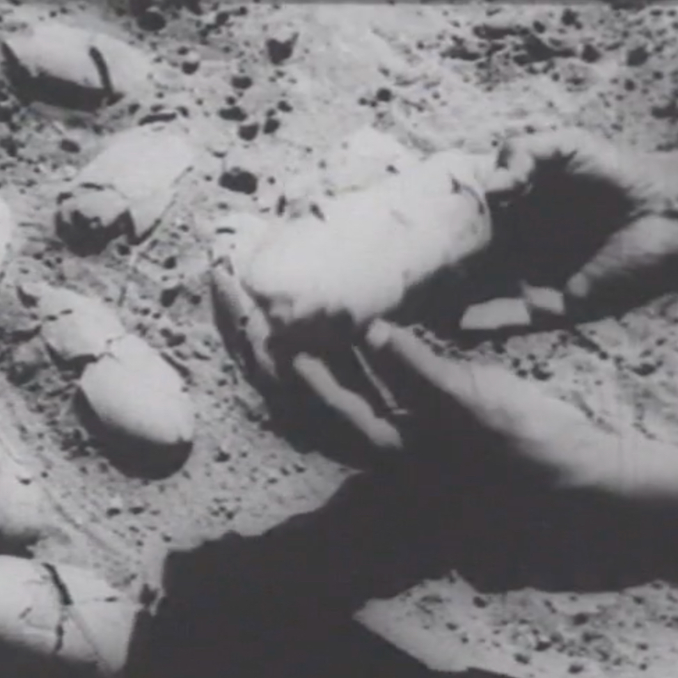 Image still from Central Asiatic Expedition fossil