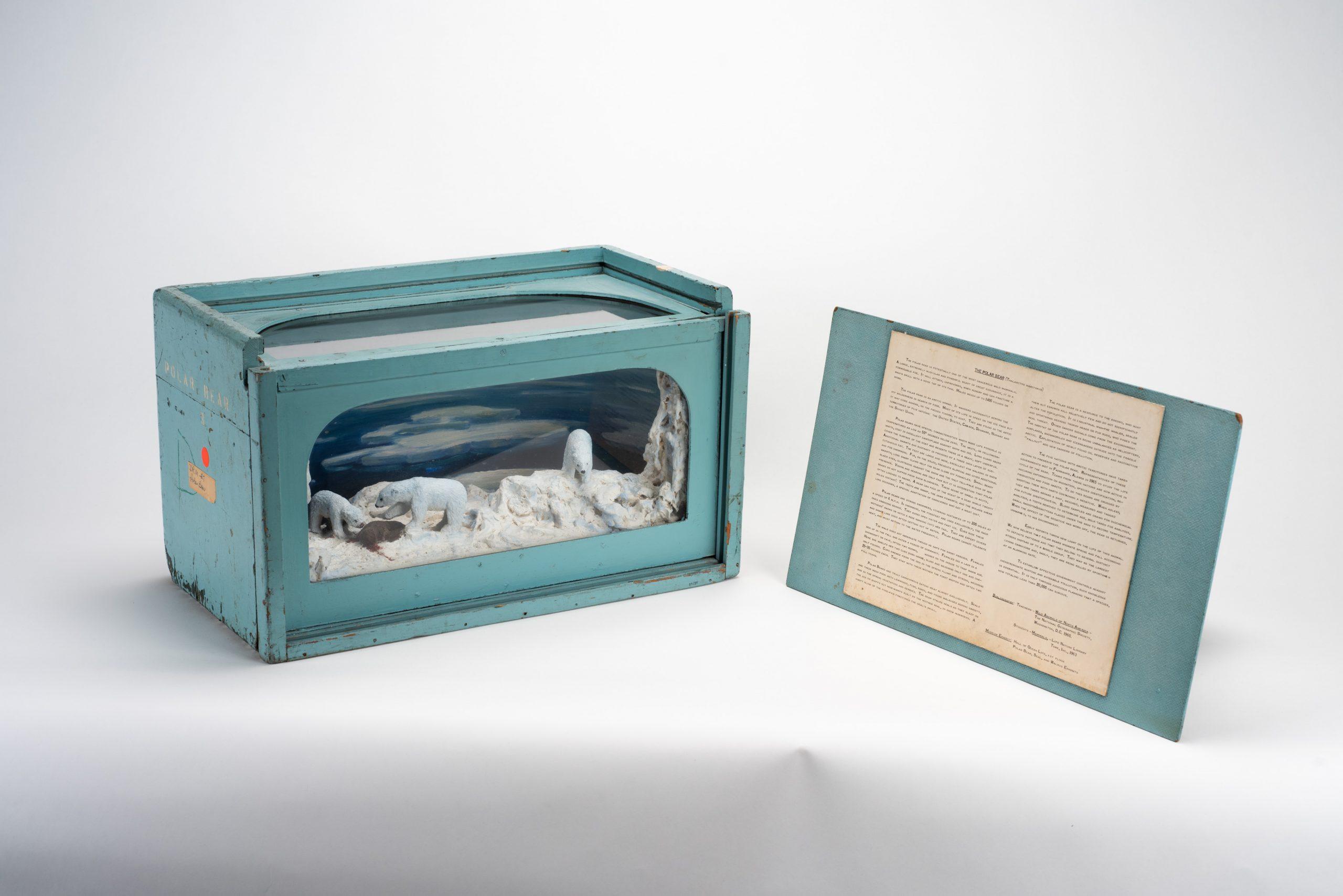 Polar Bear Educational Diorama with card