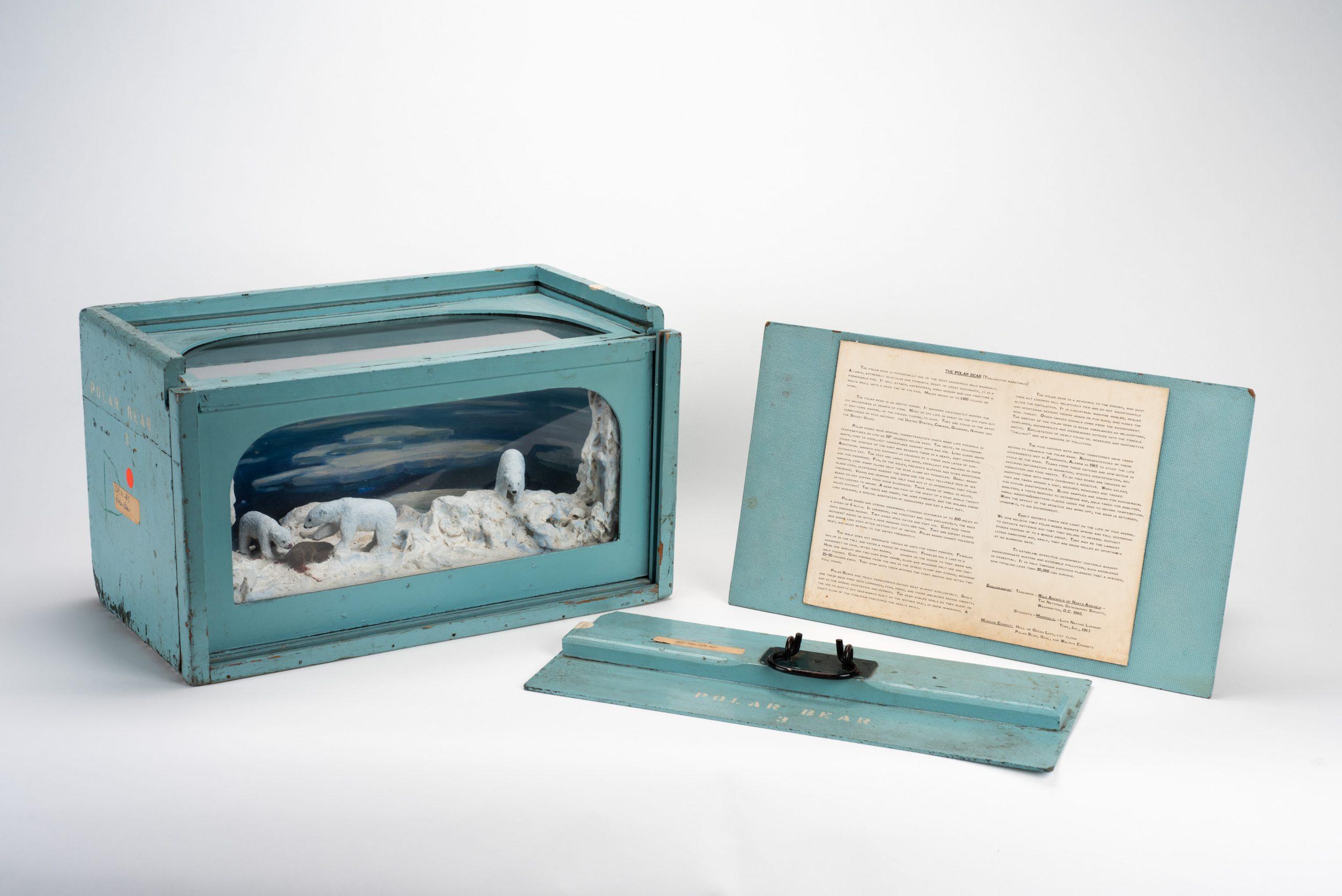 Polar Bear Educational Diorama with lid and card