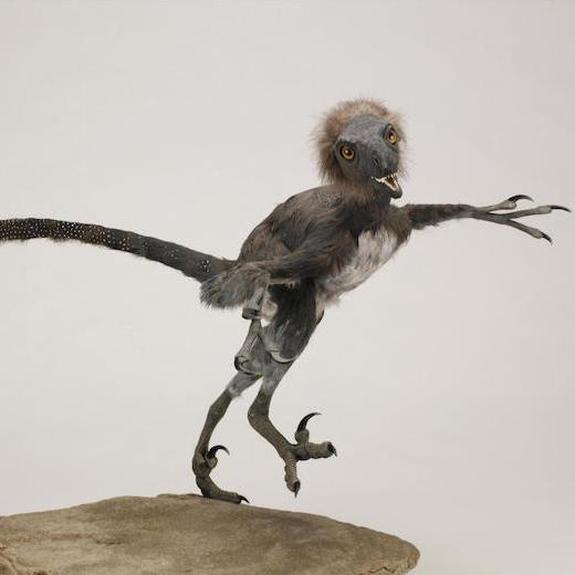 Bambiraptor model