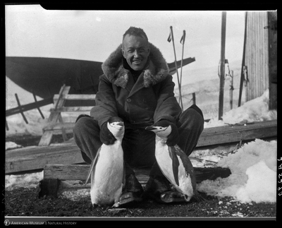 Lincoln Ellsworth with penguins