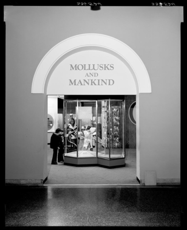 Hall of Mollusks exhibition